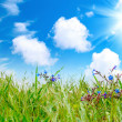 Green grass with cloudy sky — Stockfoto