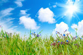 Green grass with cloudy sky — Stock Photo