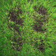 Boot prints in grass — Stock Photo