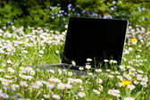 Notebook on a meadow — Stock Photo