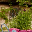 Still life in a garden — Stock Photo