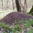 Stock Photo: Anthill