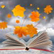 Stock Photo: Open book and maple leaves
