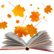 Open book and maple leaves — Stock Photo