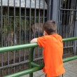 Boy looks at animals in the zoo — Stock Photo
