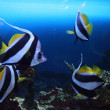 Group of fishes — Stock Photo #11538261