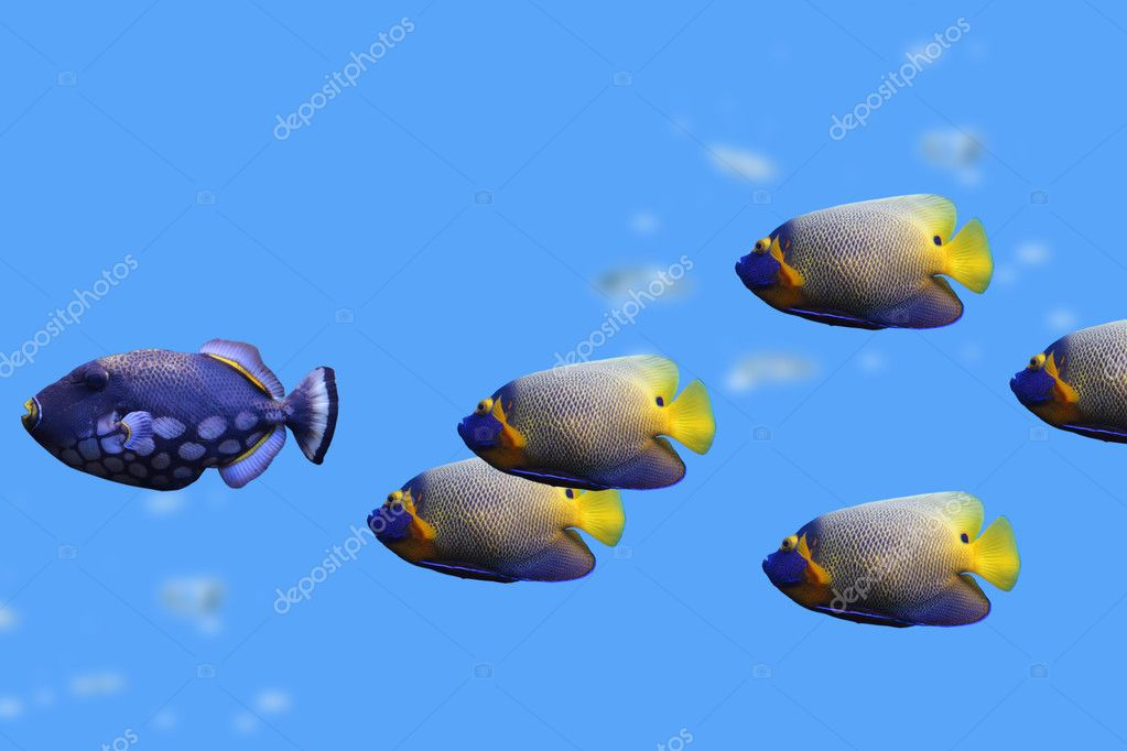 Group of fishes (clown trigger and Emperor Angelfish) — Stock Photo #11537857