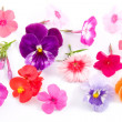 Stock Photo: Different flowers