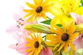 Pink and yellow flowers — Stock Photo
