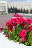 City flower bed — Stock Photo