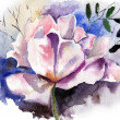 Beautiful flower in watercolor — Stock Photo