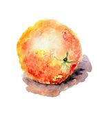 Ilustração em aquarela de laranja — Foto Stock