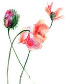 様式化されたケシの花の水彩画のイラスト — ストック写真