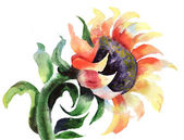 Sunflower in watercolor — Stock Photo