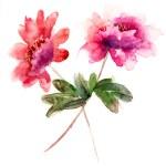 Watercolor illustration of Beautiful peony flowers — Stock Photo