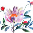 Stock Photo: Original Peony flowers