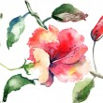 Watercolor illustration of Beautiful flowers — Stock Photo