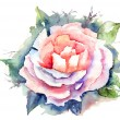 Stock Photo: Watercolor illustration of Beautiful flowers