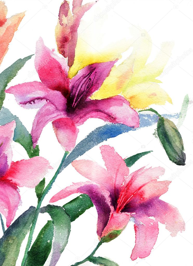Beautiful Lily flowers, watercolor illustration — Stock Photo #11648332