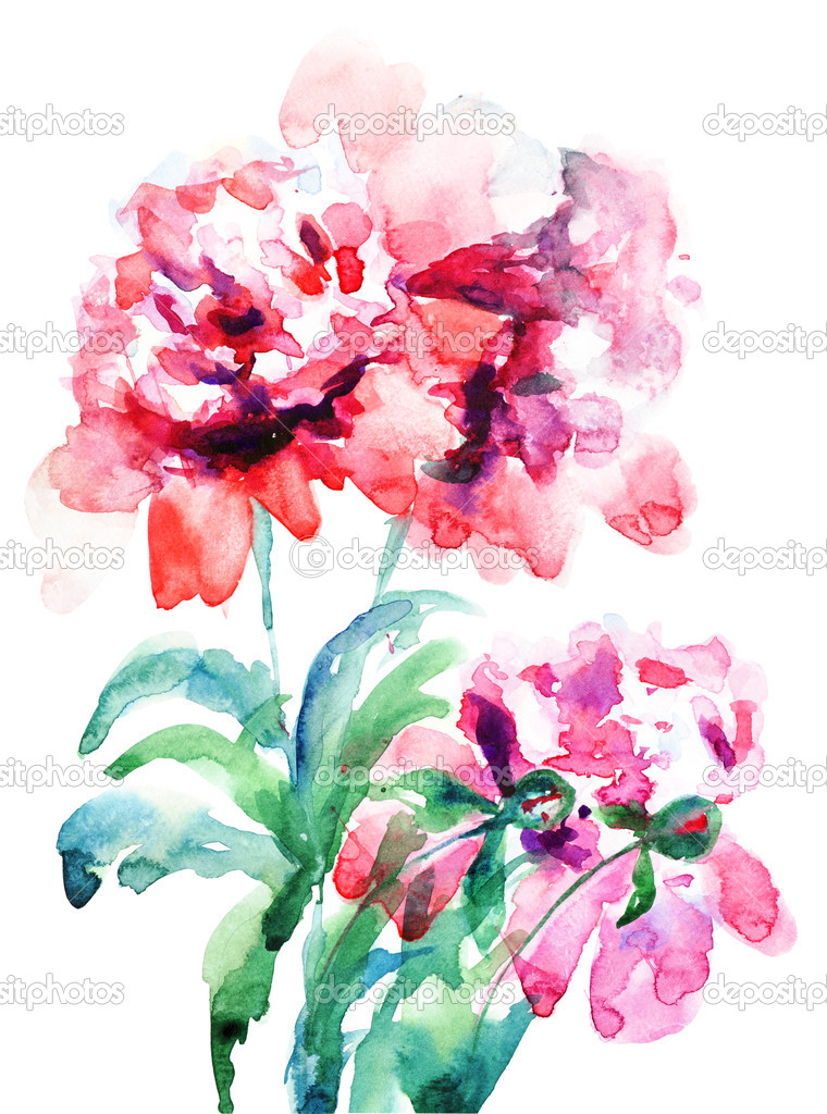 Watercolor illustration of Beautiful peony flowers — Stock Photo #11648353