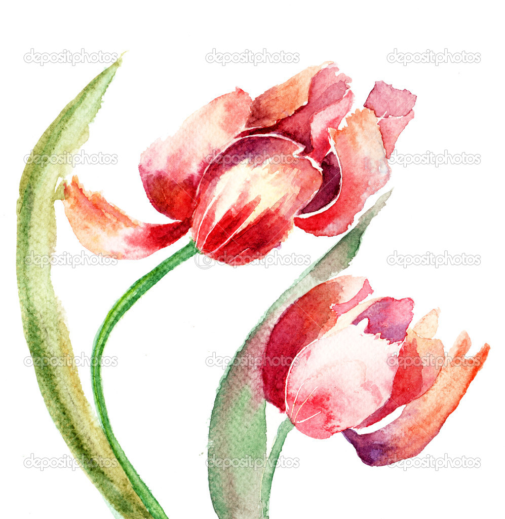 Tulips flowers — Stock Photo #11648467