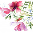 Summer flowers, watercolor illustration — Stock Photo