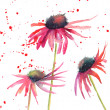 Summer flowers, watercolor flowers — Stock Photo