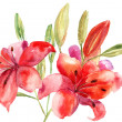 Beautiful Lily flowers, watercolor illustration — Stockfoto