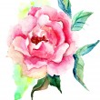 Beautiful Roses flowers, Watercolor painting — Stock Photo #12377650