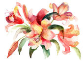Lily flowers, watercolor illustration — Stock Photo