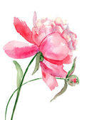 Beautiful Peony flower, Watercolor painting — Stock Photo