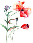 Poppy bloemen, aquarel illustratie — Stockfoto