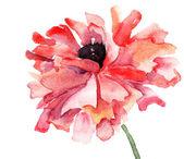 Stylized Poppy flower illustration — Stock Photo