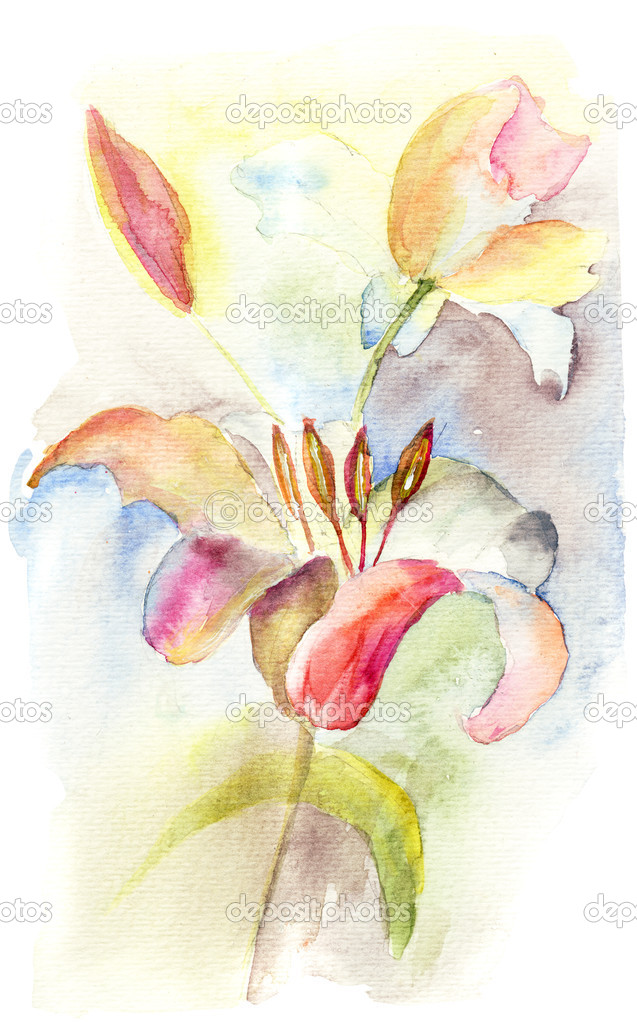 Romantic Lily flowers, watercolor flowers — Stock Photo #12377596