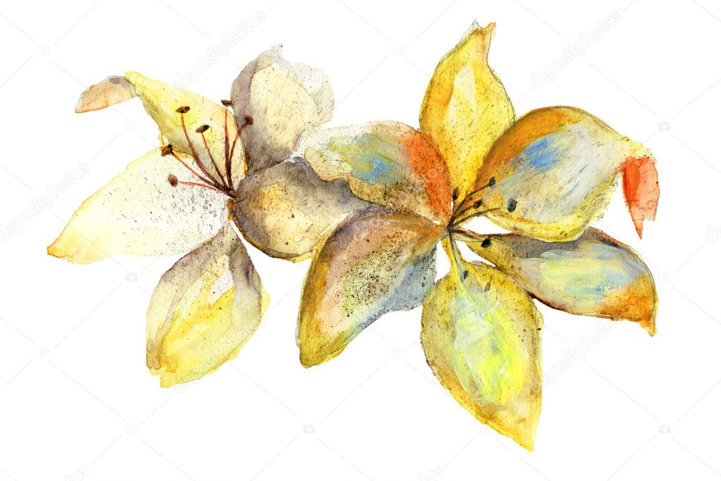 Yellow Lily flowers, watercolor illustration — Stock Photo #12377600