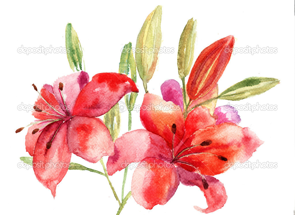 Beautiful Lily flowers, watercolor illustration — Stock Photo #12377612