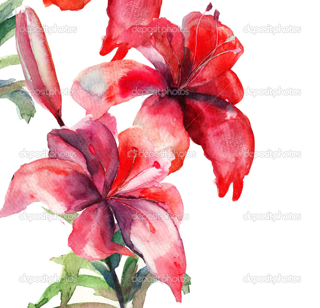 Beautiful Lily flowers, watercolor illustration — Stock Photo #12377627