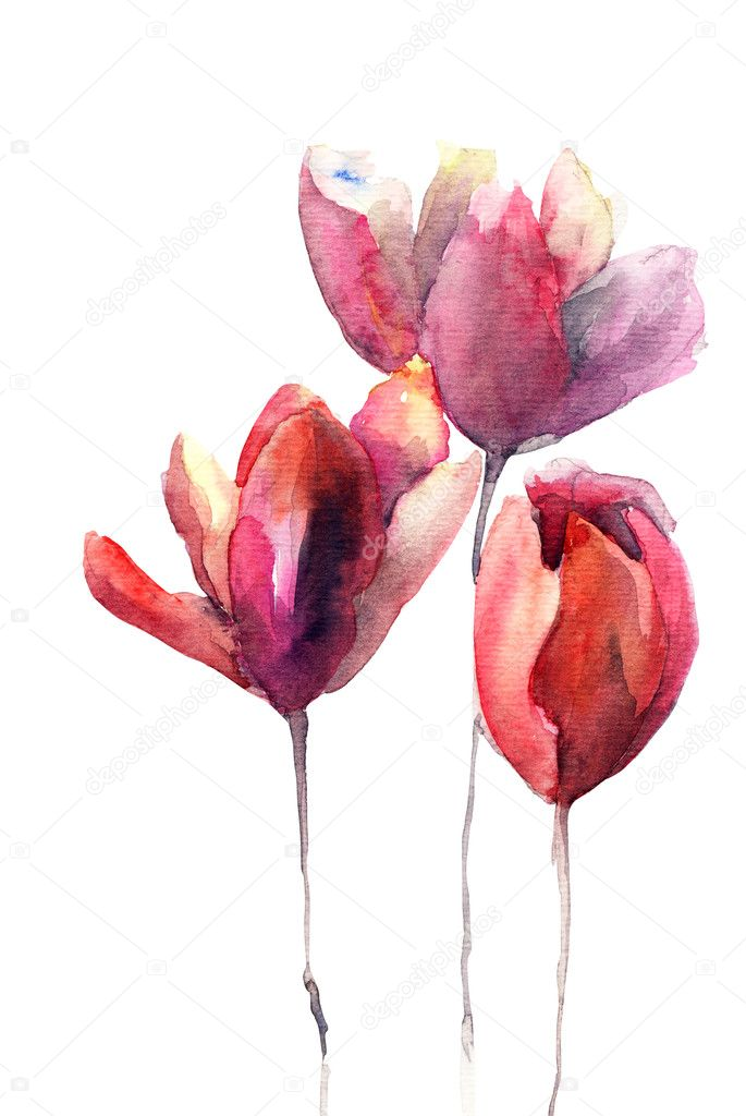 Tulips flowers  Stock Photo #12377651