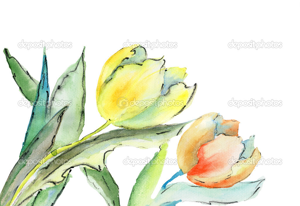 Tulips flowers, watercolor illustration — Stock Photo #12377673