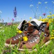 Hiking boots meadow — Stock Photo