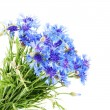 Stock Photo: Cornflower