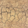 Cracks on dry ground — Stock Photo #11534862