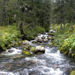 Mountain stream in the forest — Stock Photo