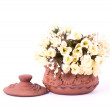 White flowers in the clay pot — Stock Photo