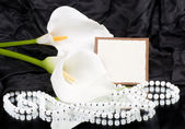 Beautiful white callas with banner add — Stock Photo