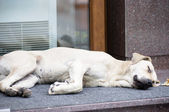 Homeless dog on road — Stock Photo