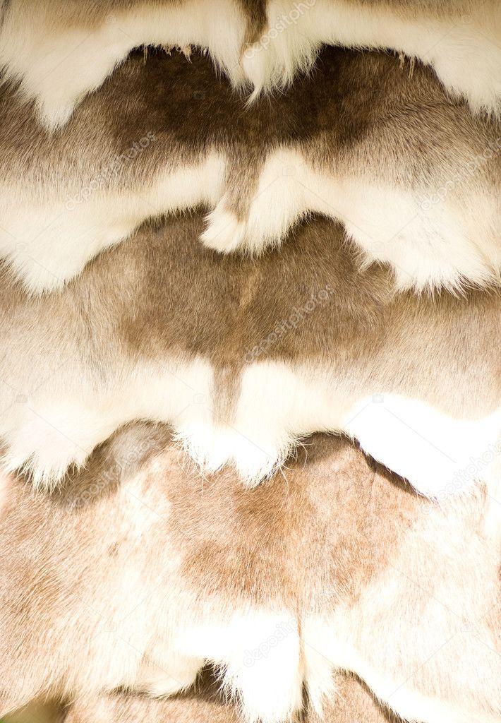 动物毛皮,背景纹理