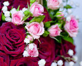 Beautiful pink and red roses — Stock Photo
