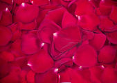 Background made of rose petals — Stockfoto