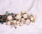 Vintage vacker spets med blommor — Stockfoto
